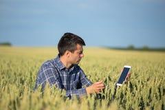 Agricoltore con la compressa nel giacimento di grano verde Fotografia Stock