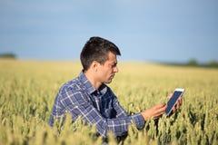 Agricoltore con la compressa nel giacimento di grano verde Immagine Stock Libera da Diritti