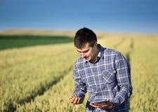 Agricoltore con la compressa nel giacimento di grano verde Fotografia Stock Libera da Diritti