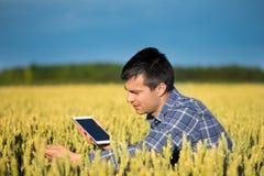 Agricoltore con la compressa nel giacimento di grano verde Immagine Stock
