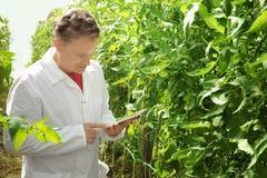 Agricoltore con la compressa in serra Fotografie Stock