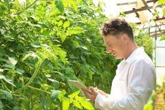 Agricoltore con la compressa in serra Fotografia Stock Libera da Diritti