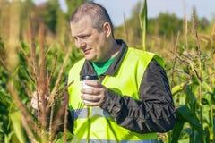 Agricoltore con la tazza di caffè sul campo di grano Fotografia Stock Libera da Diritti