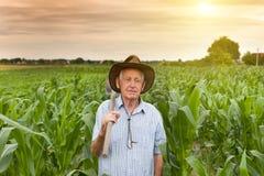 Agricoltore con la zappa nel campo di grano Fotografia Stock Libera da Diritti
