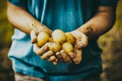 Agricoltore con le patate Immagini Stock Libere da Diritti