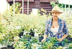 Agricoltore con le piante Fotografia Stock