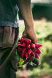 Agricoltore con le verdure Fotografia Stock