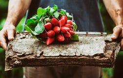 Agricoltore con le verdure Fotografia Stock Libera da Diritti