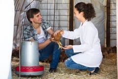 Agricoltore consultantesi veterinario dell'uomo della donna Immagine Stock