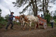 Agricoltore in Costa Rica Immagini Stock