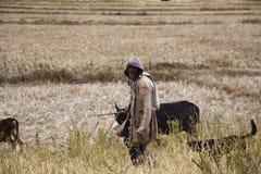 Agricoltore da Ambohitrarivo, Madagascar Fotografie Stock Libere da Diritti