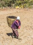 Agricoltore del Bhutanese sul campo Fotografie Stock Libere da Diritti