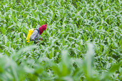 Agricoltore del campo di grano Fotografia Stock