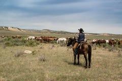 Agricoltore del cowboy sul cavallo che guarda sopra il gregge dei cavalli sulla prateria Fotografia Stock Libera da Diritti