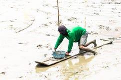 Agricoltore del cuore edule che si siede sul bordo mentre raccolga i cuori edule Fotografia Stock