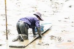 Agricoltore del cuore edule che si siede sul bordo mentre raccolga i cuori edule Fotografie Stock Libere da Diritti