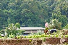 Agricoltore del Myanmar Fotografia Stock