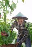 Agricoltore del peperoncino rosso Fotografia Stock