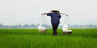 Agricoltore del riso Fotografie Stock