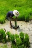 Agricoltore del riso Immagine Stock