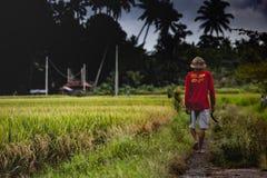 Agricoltore del riso immagini stock libere da diritti