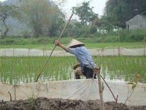 Agricoltore del riso Immagine Stock Libera da Diritti