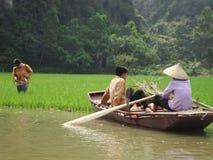 Agricoltore del riso Immagini Stock