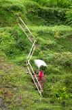AGRICOLTORE DEL RISO IN BALI Fotografia Stock Libera da Diritti