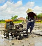 Agricoltore del riso Bali, Indonesia Immagine Stock Libera da Diritti