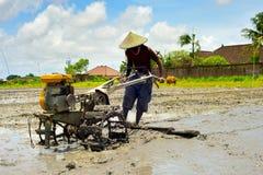 Agricoltore del riso Bali, Indonesia Fotografie Stock Libere da Diritti