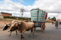 Agricoltore del riso in città Immagini Stock Libere da Diritti