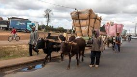 Agricoltore del riso in città Immagine Stock