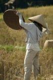 Agricoltore del riso di balinese che vaglia riso Fotografie Stock