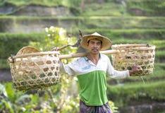 Agricoltore del riso di balinese sul giacimento del riso Fotografie Stock