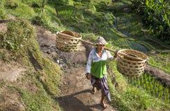 Agricoltore del riso di balinese sul giacimento del riso Immagini Stock Libere da Diritti