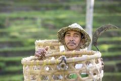 Agricoltore del riso di balinese sul giacimento del riso Immagine Stock Libera da Diritti