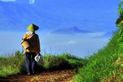 Agricoltore del riso in Indonesia Fotografia Stock