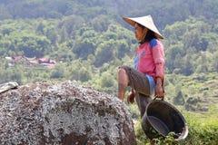 Agricoltore del riso, Indonesia Immagine Stock Libera da Diritti