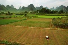 Agricoltore del riso Li Valley Fotografie Stock Libere da Diritti