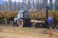Agricoltore dell'americano di Indo Fotografia Stock Libera da Diritti
