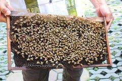 Agricoltore dell'ape Immagine Stock
