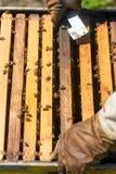 Agricoltore dell'ape con il fumatore su un alveare Fotografia Stock