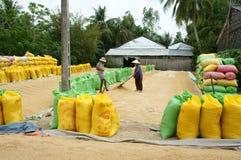 Agricoltore dell'Asia, riso asciutto, borsa della risaia, stoccaggio Immagine Stock