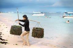 Agricoltore dell'erbaccia del mare di Bali Fotografia Stock Libera da Diritti