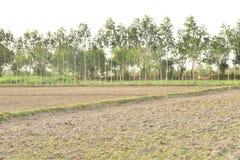 Agricoltore dell'indiano di Tha Immagine Stock Libera da Diritti