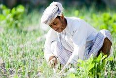 Agricoltore dell'Oman del riso Immagini Stock