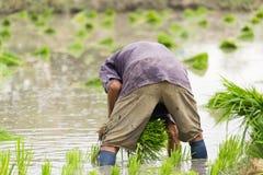 Agricoltore dell'uomo Fotografia Stock Libera da Diritti