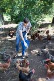 Agricoltore dell'uomo che dà la roba di alimentazione ai polli Fotografie Stock