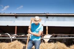 Agricoltore dell'uomo che lavora all'azienda agricola con le mucche da latte Fotografie Stock Libere da Diritti