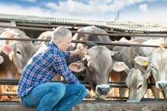 Agricoltore dell'uomo che lavora all'azienda agricola con le mucche da latte Immagini Stock Libere da Diritti